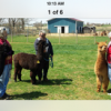 Alpaca Ownership Information in PA
