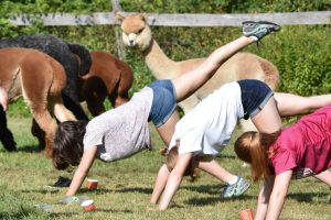 people participating in alpaca yoga class