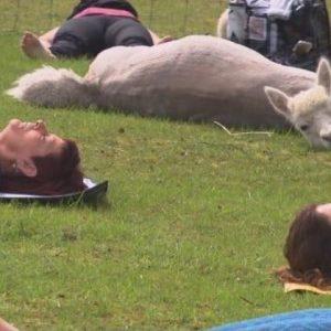 Alpaca Yoga Classes Gettysburg, PA